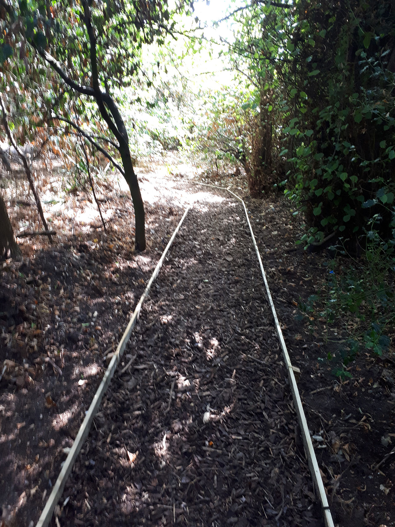 Woodland wood-chip path