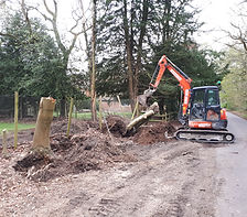 Tree removal in Somerset