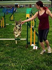 Dog Agility and Activity Class