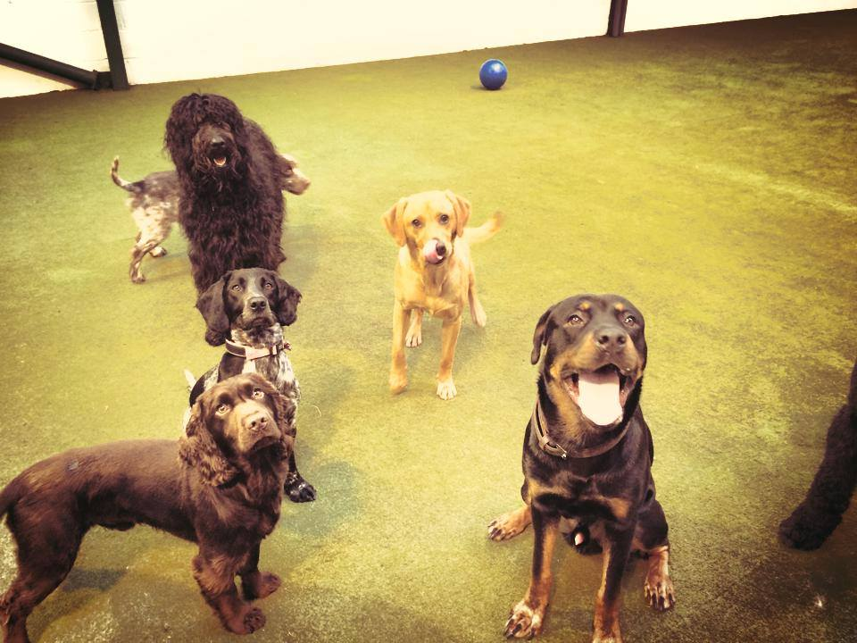 Dog daycare indoors morpeth