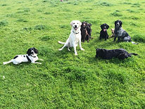 Dog Training Northumberland and Newcastle
