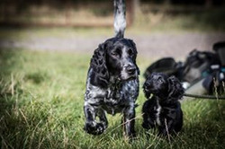 dog training north east