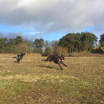 Dog Training Northumberland and Newcastle