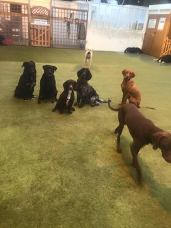 Dog daycare and training Morpeth