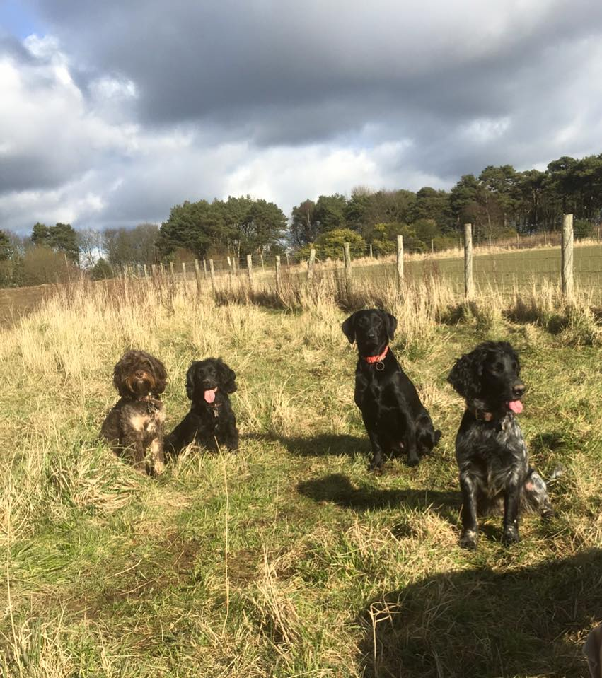 dog daycare morpeth