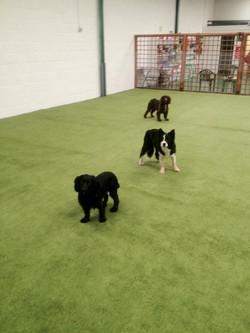Dog daycare indoors morpeth