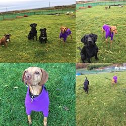 #mondaymorning #dogsofinstagram #doggyda