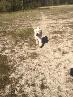 Outdoor dog daycare north east