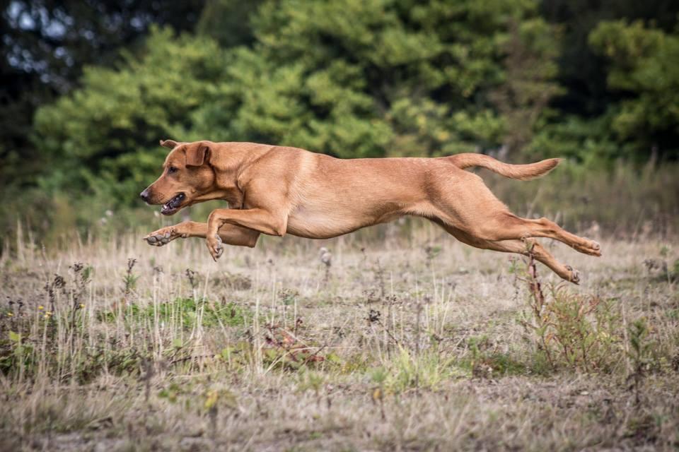 dog training morpeth