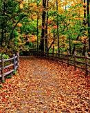 Fall Bridge.jpg