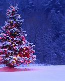 Christmas Tree at Night.jpg