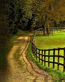 FIELD WITH FENCE.jpg