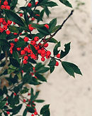 Red Berries on White.jpg