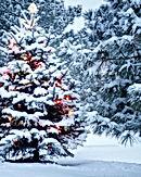 Christmas Tree and Snow.jpg