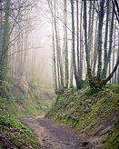 Morning Forest.jpg