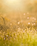 Spring Field.jpg