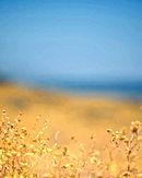 Meadow and Sky.jpg