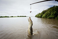 Spectacular Jumping Crocodiles, Adelaide River, Darwin NT