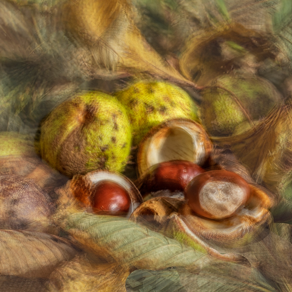 Autumn is a great time of year to see the beautiful warm tones of nature. Here, I've taken leaves, twigs and fruit from a Horse Chestnut tree and used them to produce this still-life image of 'conkers' to show off the form of the leaves, the spiky fruit and the smooth conkers inside, along with the greens, browns and golds that go with the season.