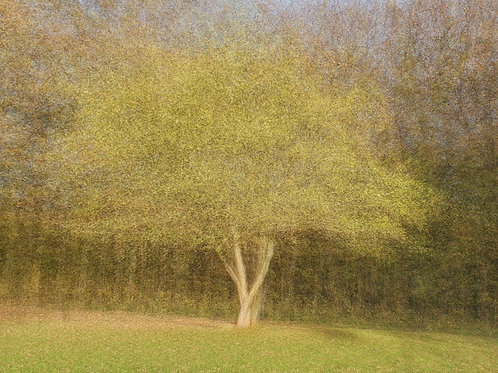"Caught in Autumn Sunlight #1 (digital download - 16""x12"" @300DPI)"