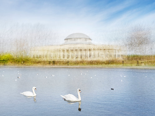 Palace of Arts, Newcastle, Newcastle upon Tyne, Exhibition Park, Park, Pond, Birds, Swan, Gull, Black headed gull, Moorhen, B