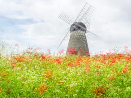 Impressionism, Wild Flowers and Windmill