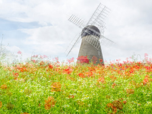 Wild Flowers and Windmill