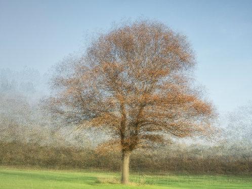 "Caught in Autumn Sunlight #2 (digital download - 16""x12"" @300DPI)"