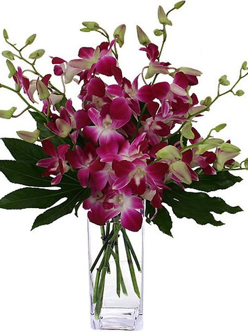 ooh la la orchids!!