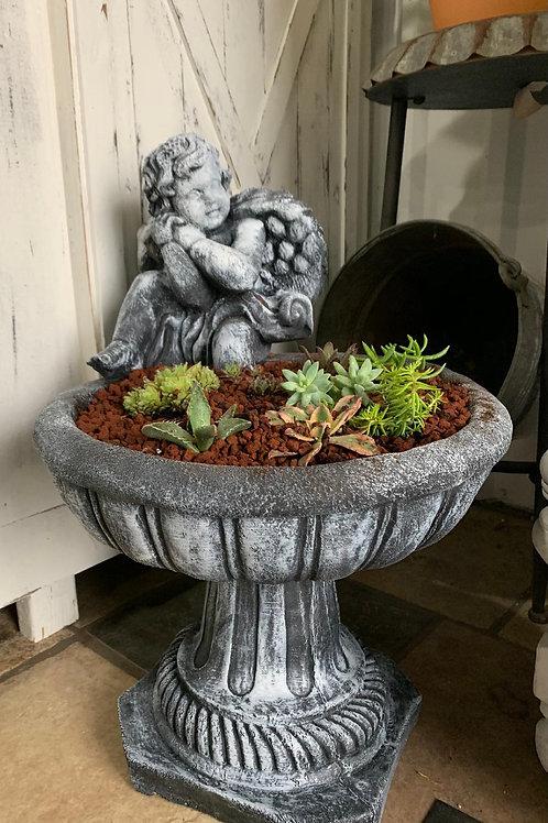 angel baby succulent garden