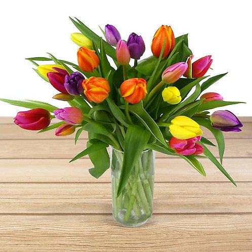 tulips in bloom!