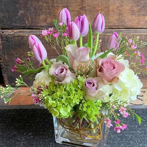 tulip rose garden
