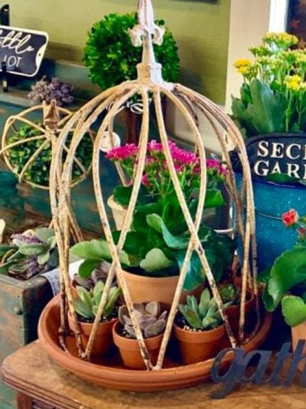 succulent aviary