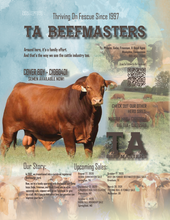 TA Beefmasters