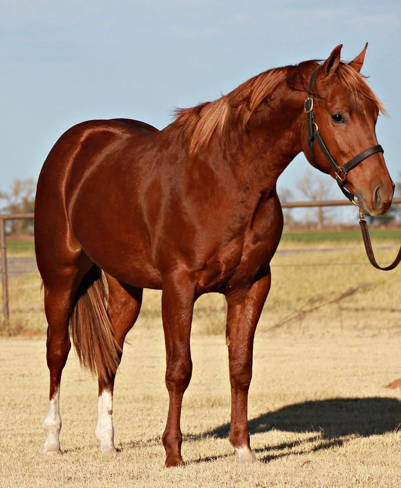 Santa Rosa Equine
