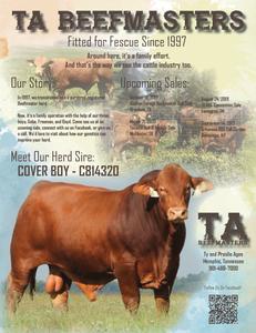 TA Beefmasters Ad