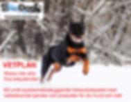 Vetplan-hund-EJfotograf.jpg