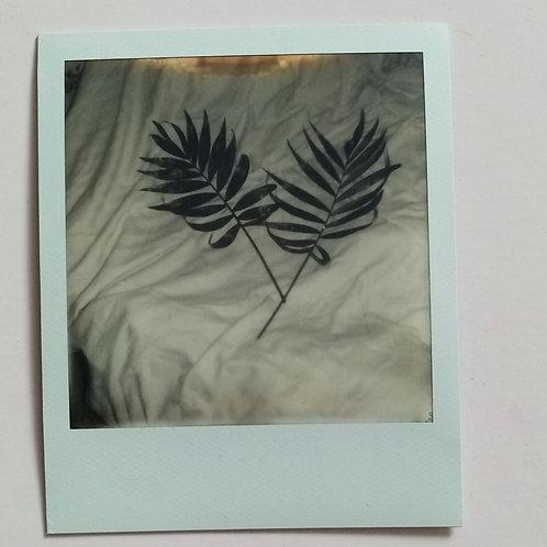 Palm Polaroid B+W