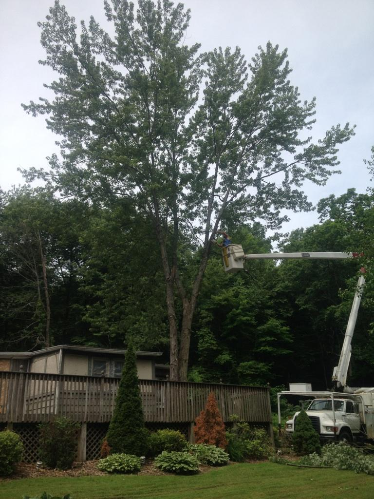 Contes Brothers Tree Service LLC