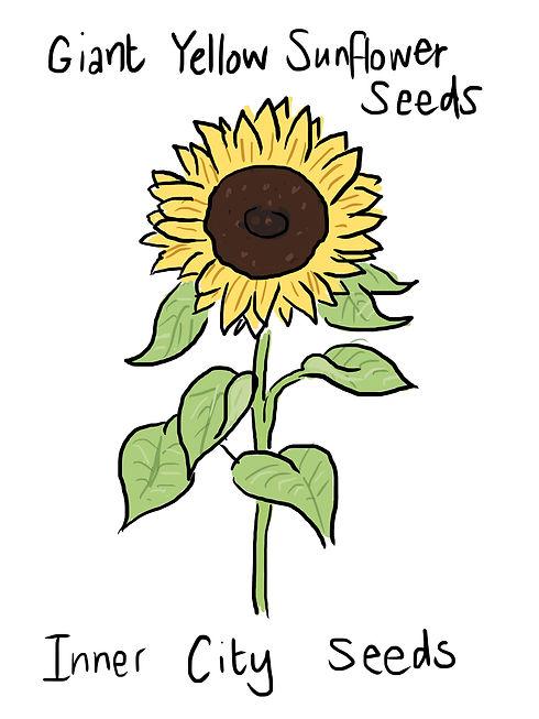 Helen-sunflower.jpg