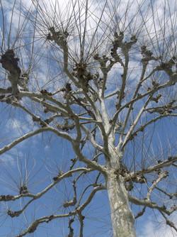 Williamsburg Treetop - Linda Osiecki DSC