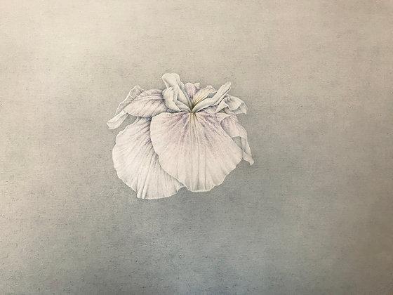 white flower 松下愛
