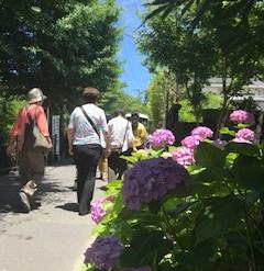 鎌倉紫陽花巡り、ワンポイントアドバイス