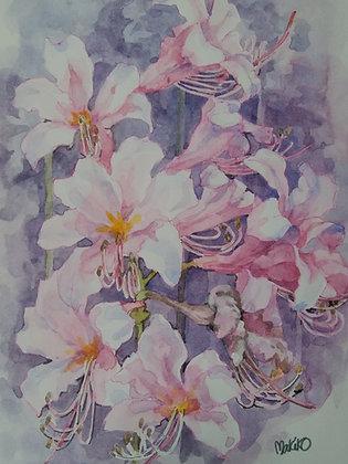 ピンクの花 -    杉本真喜子