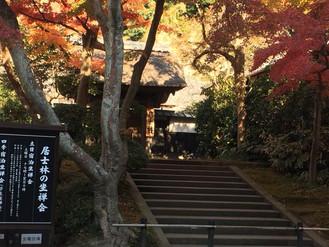 北鎌倉の紅葉は今が見頃です。