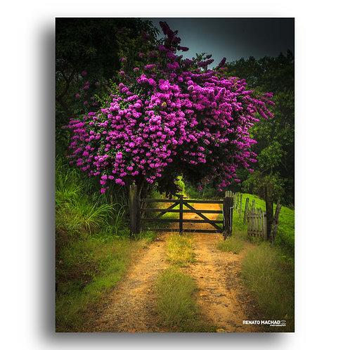 Impressão Fine Art  ( Cod. IMG_4289 )  Primavera