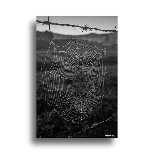 Impressão Fine Art ( COD.: IMG_9999 ) - Teia