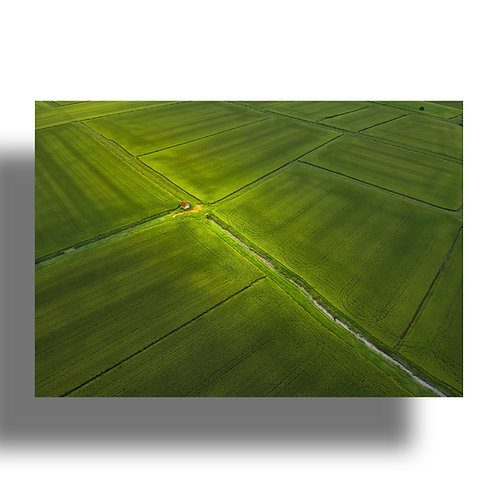 Impressão Fine Art ( COD.: IMG_9999 ) - Campos de arroz