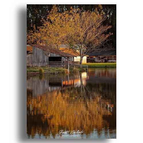 Impressão Fine Art  ( Cod. IMG_9999 ) Folhas de Outono