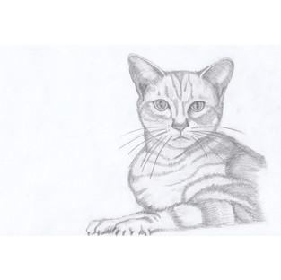 Cat Realistic Portrait